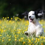 Giving Back To Our Pets: CBD Oil For Dogs And Other Ways