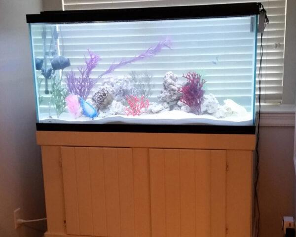 90-gallon-fish-only-aquarium-setup
