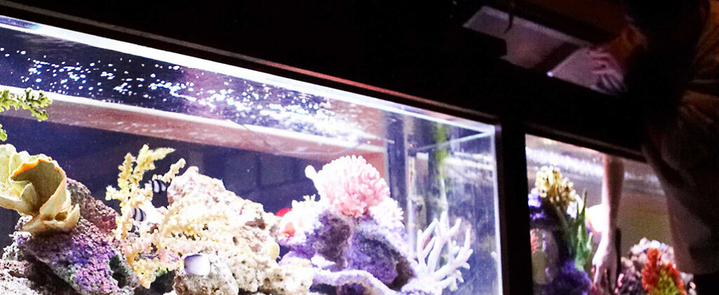 maintenance personel cleaning twin saltwater aquariums