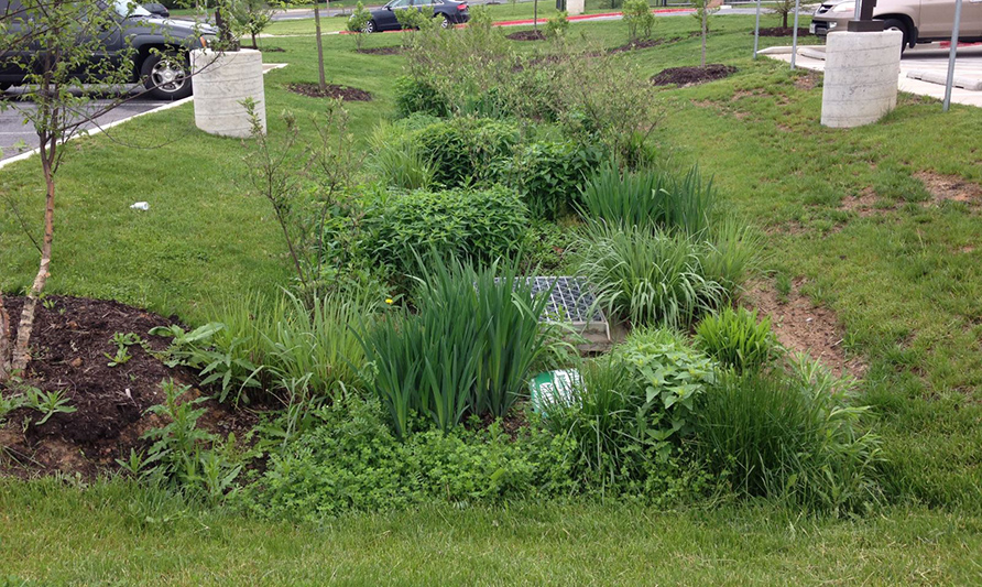 Lowland flowers filter the runoff that flows into our rivers. We call these Stormwater BMPs.