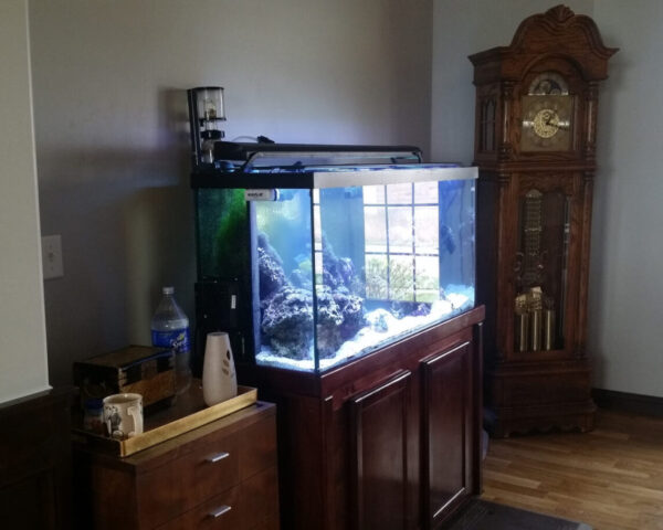 Cherrywood aquarium bathed in daylight