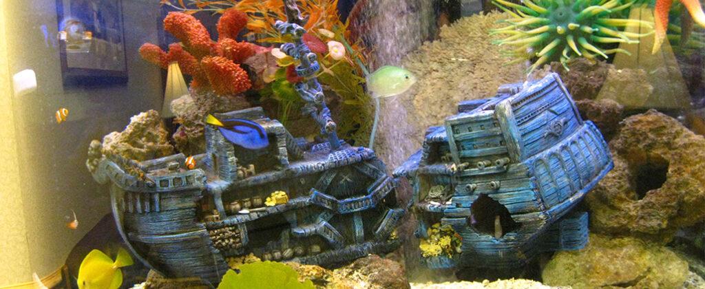 saltwater-aquarium-with-shipwreck