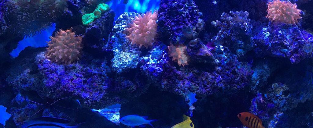 shimmering-coral-reef-aquarium-at-night