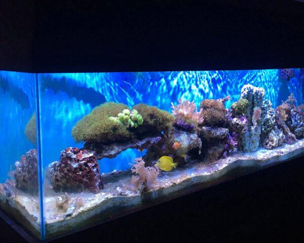 shimmering-soft-coral-reef-aquarium