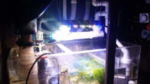 How to install a UV Sterilizer in Sump