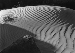 Dune at Granite Falls, Grand Canyon National Park, Arizona, copyright 1956 by Philip Hyde. Color version featured in Time and the River Flowing: Grand Canyon, the 1964 book that helped galvanize worldwide opposition to two proposed dams in the Grand Canyon. This photograph will be featured in Photography in America's National Parks and is part of the George Eastman Museum permanent collection.
