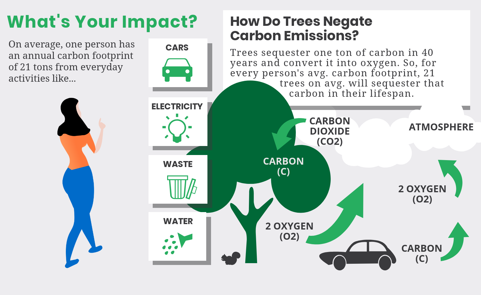 Image for Why plant trees?