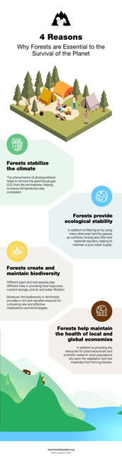 Image for THE FOREST BIOME – TYPES OF FORESTS