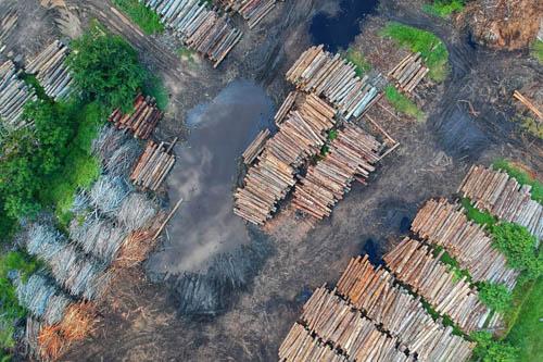 Image for Deforestation /Reforestation