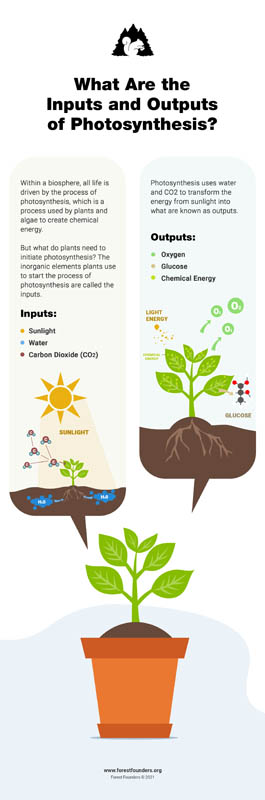 Image for PHOTOSYNTHESIS