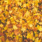The 2019 Fall Housing Market & You: 4 Tips