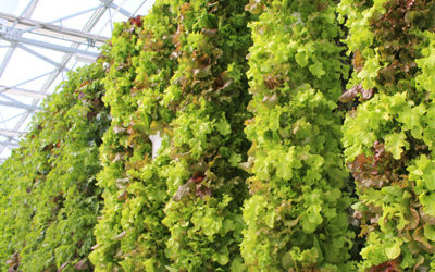 Managing the pH and EC of a Tower Farm by Tower Garden®: