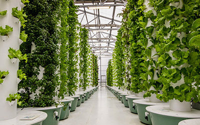 Agrotonomy provides tower farm greenhouse turnkey solutions