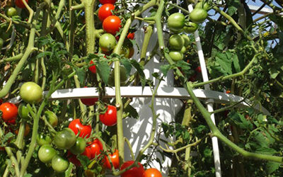 Support Cages for Tower Garden & Tower Farms