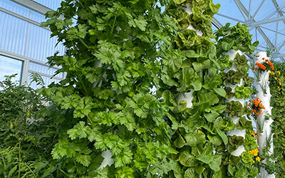 Tower Garden technology might be pricey, but it is far from being expensive!