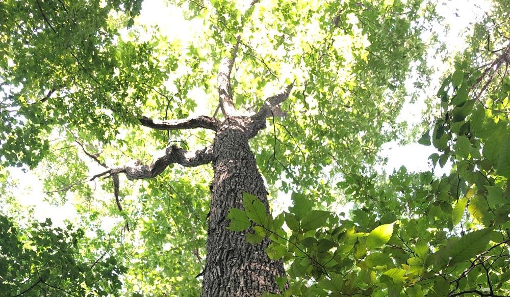 Obtenga dos árboles gratis en Orlando