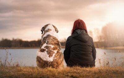 Prepare a sus mascotas para los desastres