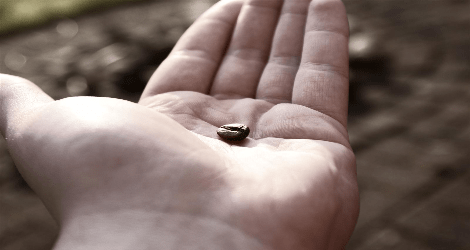 photo of a hand holding a coffee bean
