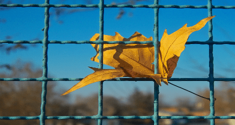 photo of a leaf caught in prison wire