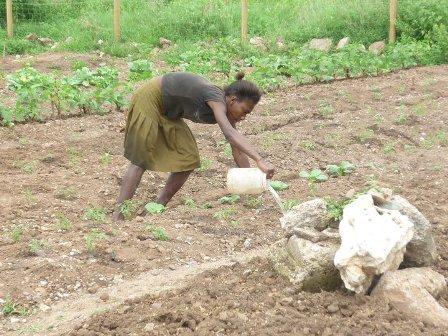 Farming_inna_di_city_UR_Ministry_10