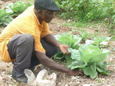 Farming_inna_di_city_UR_Ministry_8