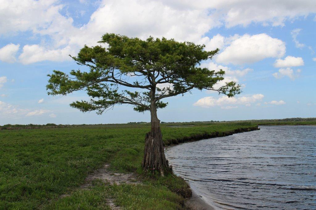 Tom Choma Tree