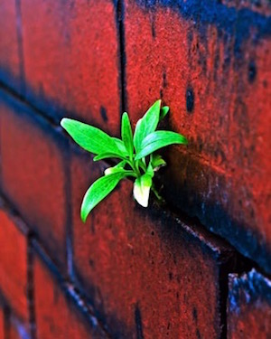 plant-on-the-brick-wall - PD