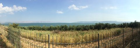The sea of Galilee, moments from the end of our journey.