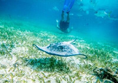Hol_Chan_Underwater_Trip01-19