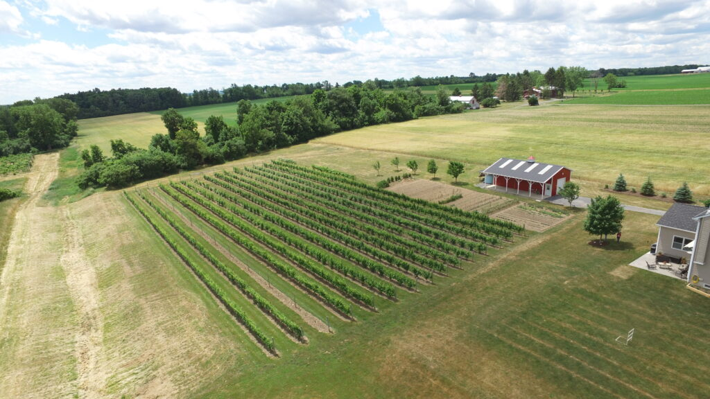 An overhead view of New Vines' vineyard and barn from above