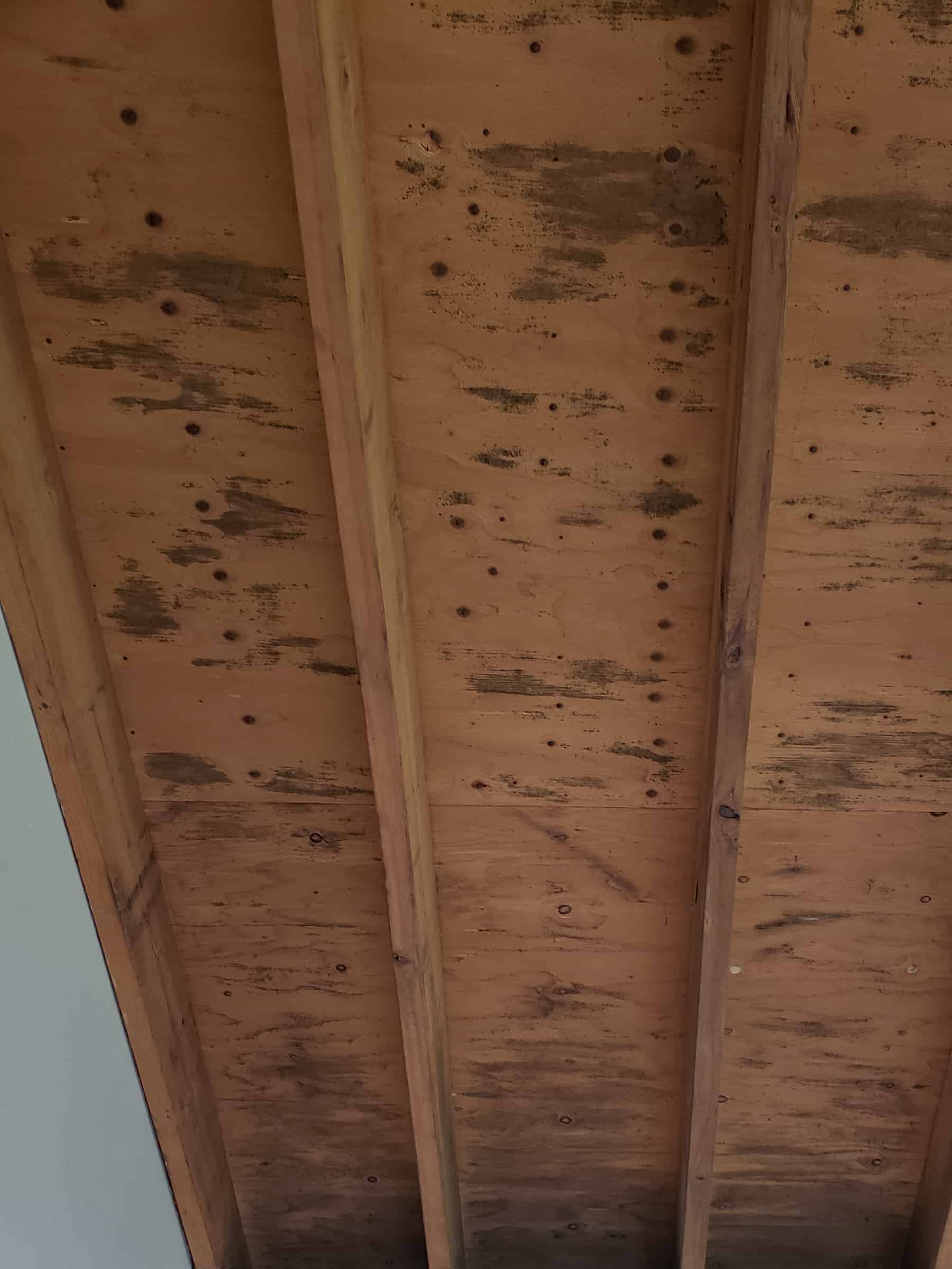 Before Mold Remediation Removal Photo