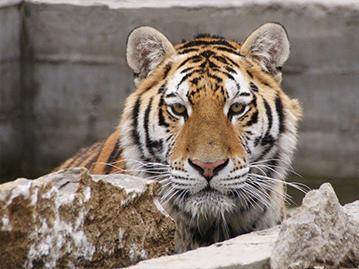 Zoo de Saint-David-de-Falardeau
