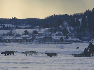 Traîneaux à chiens Alaskan du Nord