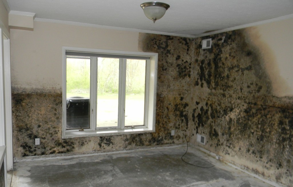 Mold Removal in Torrance