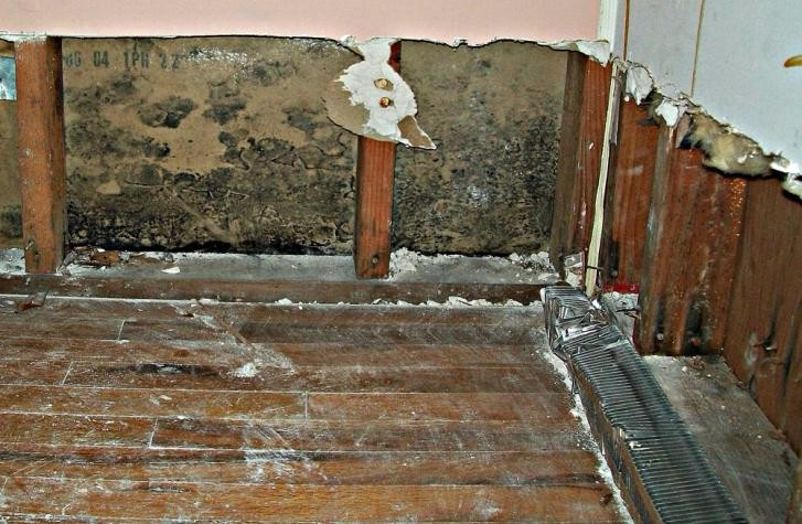 Removal of Mold from Home