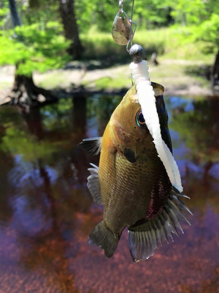 Fish by Vickie Held