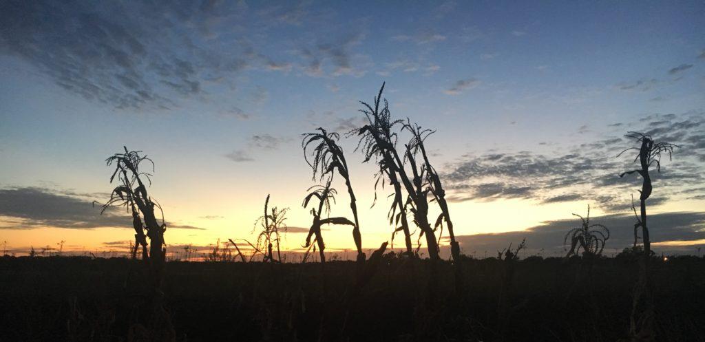 Sunset in Josephine, TX