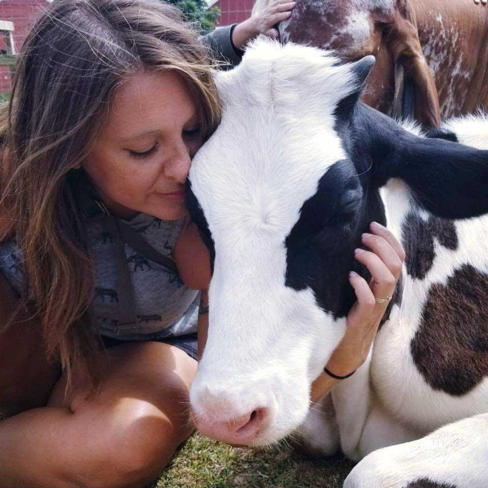 cow.jpg?time=162407