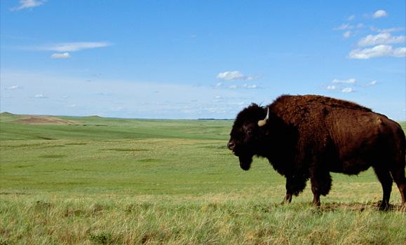 Scythian North Dakota Acquisitions