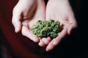 Colorado Cannabis Sales Hit Record High