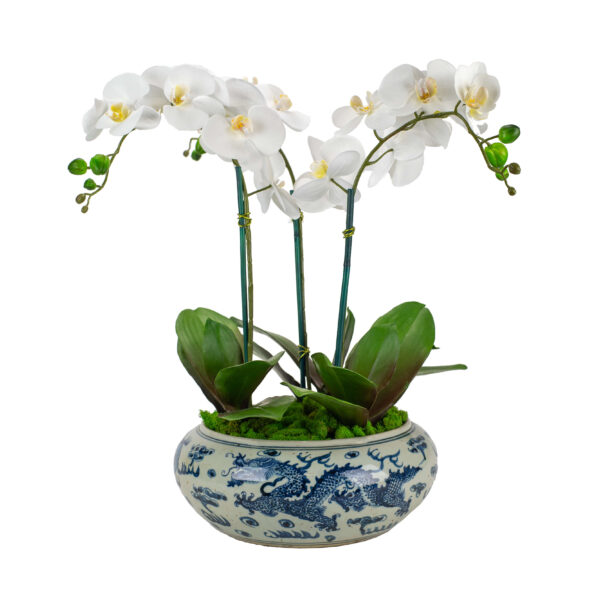 White silk orchids in a blue and white dragon vase.