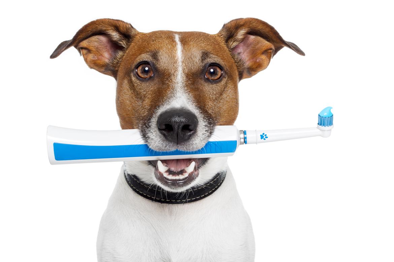 Dental Cleaning Procedure