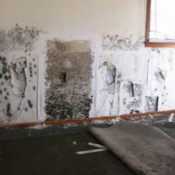 Mold Cleaning Rochester Hills MI
