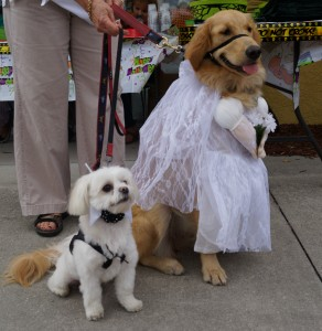 Bride and Groom at Wag-o-Ween, Wag Natural Pet Market 2012