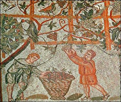 greek grape picking
