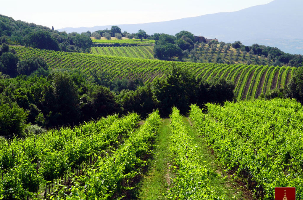 Organic Wine – Italy Leads the Way