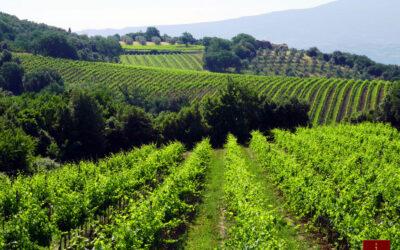 Organic Wine – Italy Leads the Way