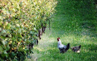 What is Biodynamic Wine?