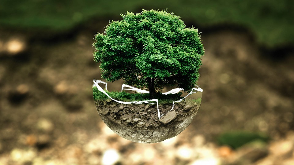 A tree growing inside of a glass orb