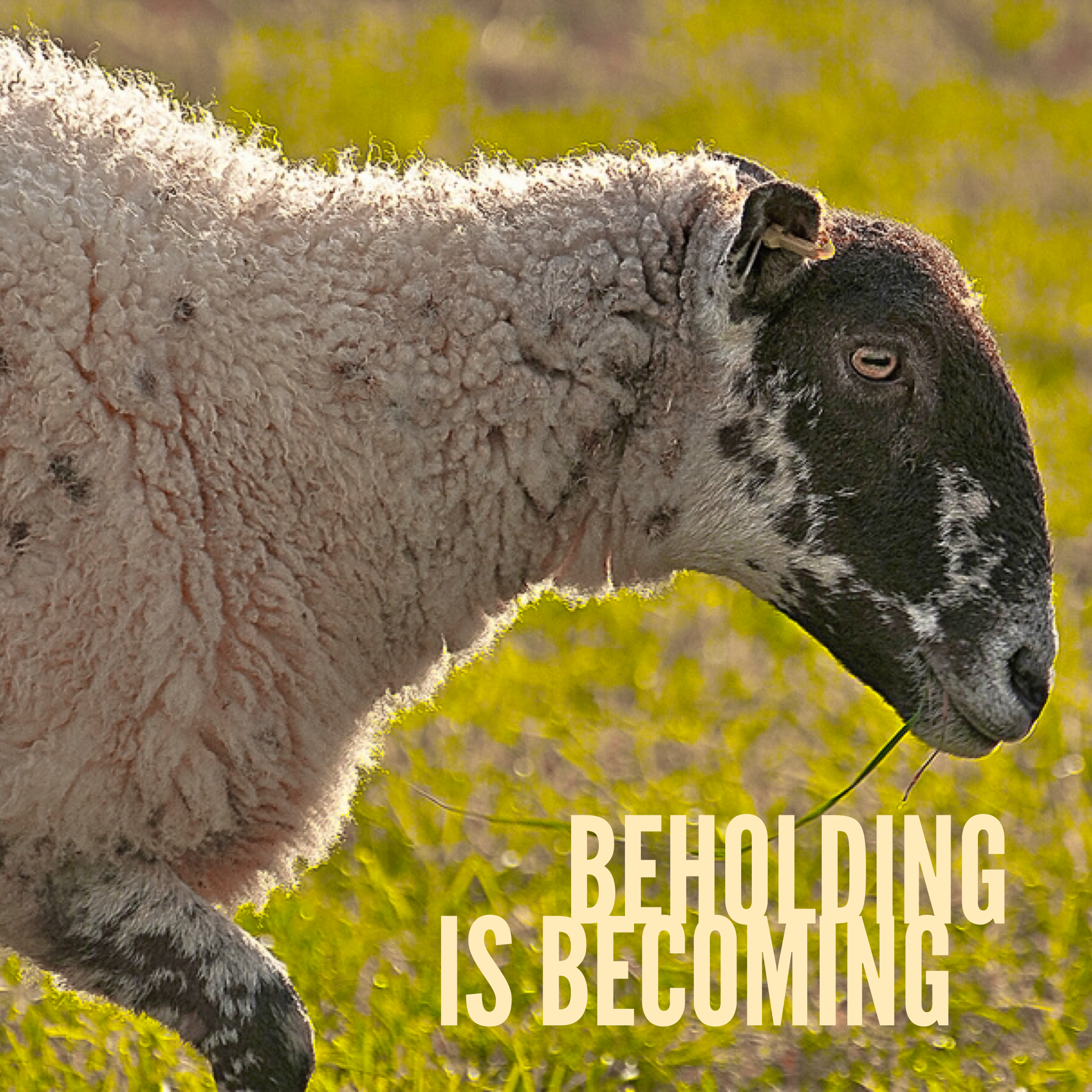 Beholding is Becoming